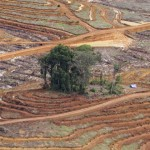 gambar-foto-kerusakan-hutan-8