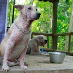 Both has a serious demodex skin disease and must get daily extra care to be cured